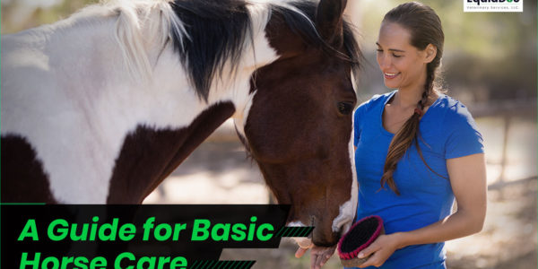 Essential Horse Care Guide to Keep Your Horse Happy & Healthy
